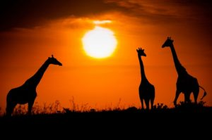 An African sunset